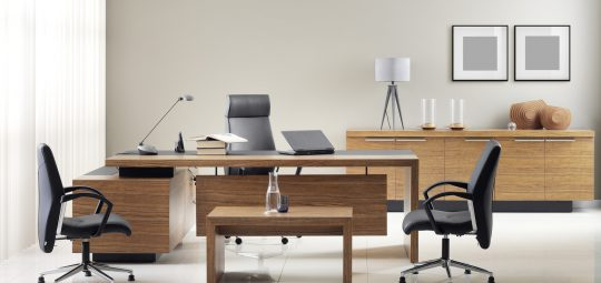 cat_office